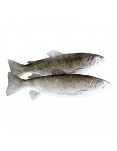 Imitación de truchas de rio para pescaderías y la decoración de escaparates de tiendas o comercios