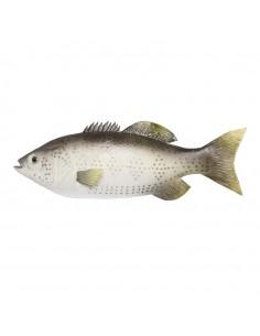 Imitación de perca europea para pescaderías y la decoración de escaparates de tiendas o comercios