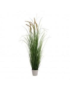Cebolla hierba planta en maceta para la decoración de fiestas populares y escaparates