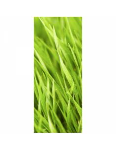 Banner-poster de hierba con gotas de agua para la decorar en primavera centros comerciales y escaparates