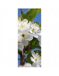 Banner-poster flor de cerezo blanca para la decorar en primavera centros comerciales y escaparates