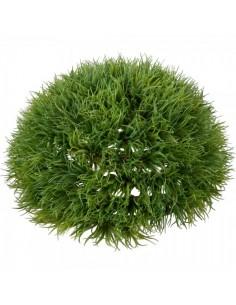 Hierba de lavanda en cúpula verde Ø25x12