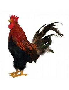 Gallo con plumas de pie para la decorar espacios y escaparates de verano con mamíferos y aves