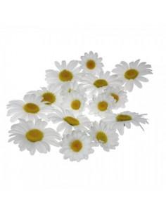 Flores de margarita para esparcir para escaparates veraniegos con helados en tiendas