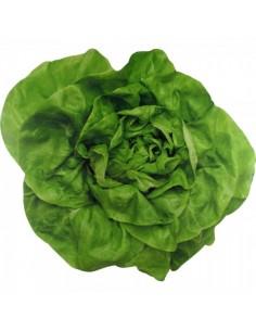 Imagen perfilada fotográfica de una lechuga para ensalada para la decoración de escaparates en verano con imitación alimentos