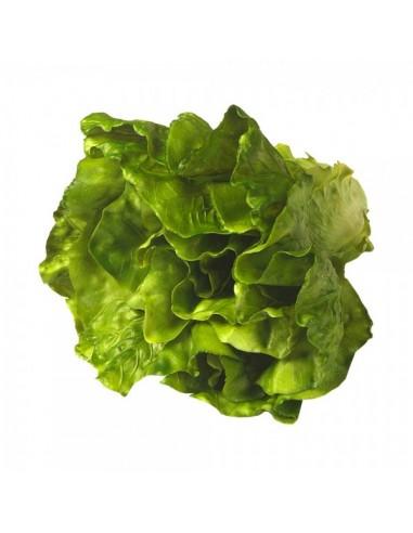 Imitación de lechuga verde natural para la decoración de escaparates en verano con imitación alimentos