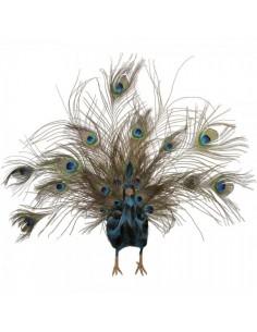 Pavo real con plumas abiertas para la decorar espacios y escaparates de verano con mamíferos y aves