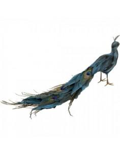 Pavo real andando con plumas cerradas para la decorar espacios y escaparates de verano con mamíferos y aves