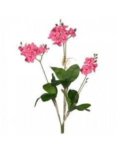Ramillete de orquídeas