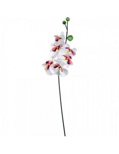 Flor de orquídea grande para escaparates veraniegos con helados en tiendas
