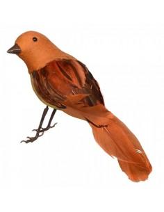 Pájaro petirrojo o robín de pie para la decorar espacios y escaparates de verano con mamíferos y aves