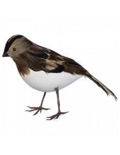 Pájaro gorrión de pie para la decorar espacios y escaparates de verano con mamíferos y aves