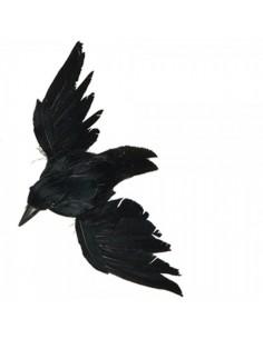 Pájaro cuervo volando para la decorar espacios y escaparates de verano con mamíferos y aves