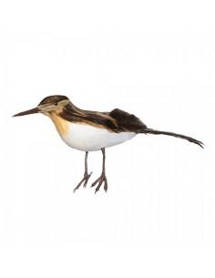 Pájaro pico largo de pie para la decorar espacios y escaparates de verano con mamíferos y aves