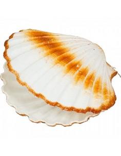 Imitación almejas semiabiertas para pescaderías y la decoración de escaparates de tiendas o comercios