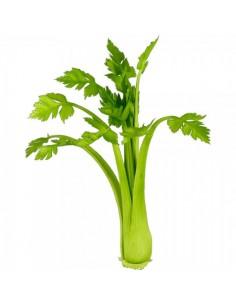 Imitación apio verde para fruterías y la decoración de escaparates de tiendas o comercios