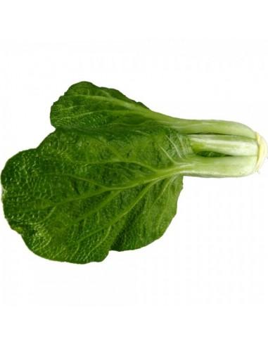 Imitación acelga verde natural para fruterías y la decoración de escaparates de tiendas o comercios