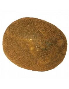 Imitación kiwi natural para fruterías y la decoración de escaparates de tiendas o comercios
